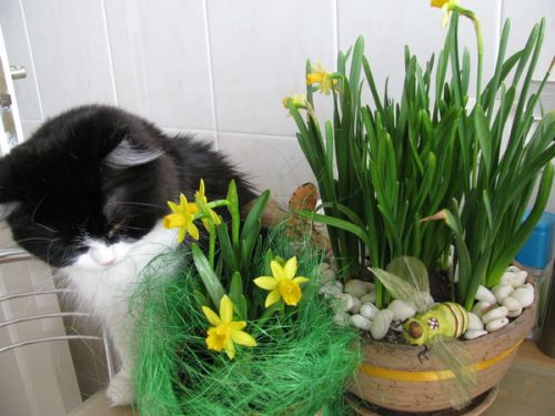 коты и цветы - Страница 2 U_181852773