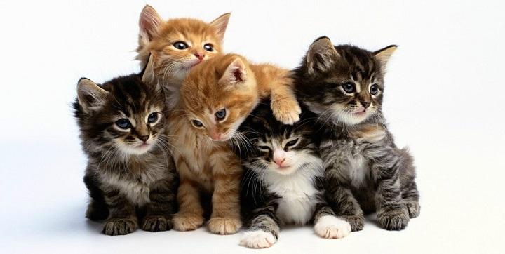 ¿Sabias que.... ? Dos-o-mas-gatos1