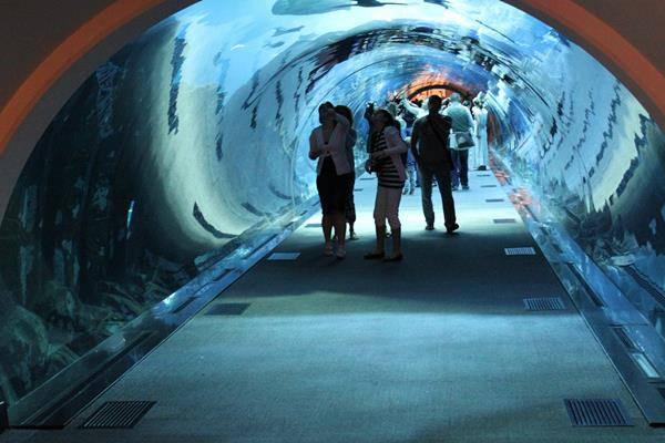 Le Meraviglie della Natura - Pagina 22 Dubai-acquario
