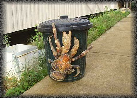 Random thought of the day! - Page 2 CoconutCrab
