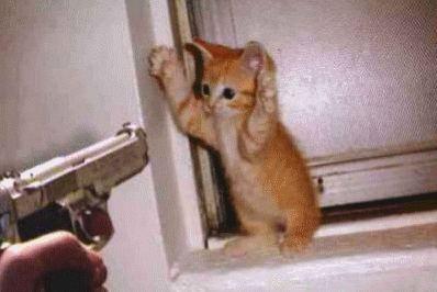 Stop à l'invasion des chats ! - Page 2 Chat