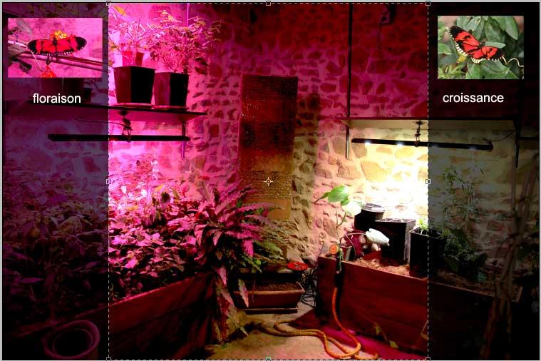 histoire d'une serre sous lumière électrique 002