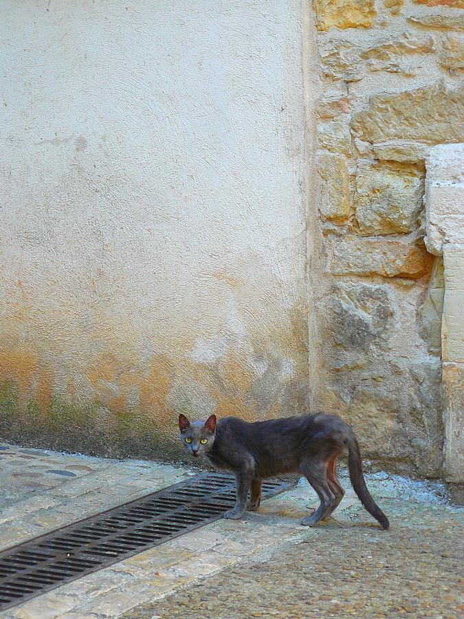 Chat et gouttière Diego-P1120120