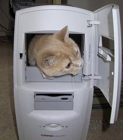 ŠALJIVE SLIKE Chat_PC