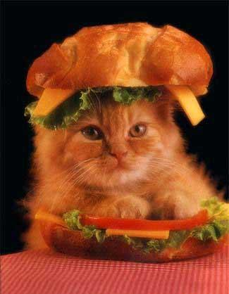 Stop à l'invasion des chats ! Chat_burger