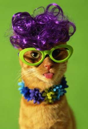 Stop à l'invasion des chats ! Chat_mode