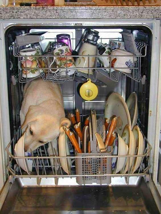 Les tâches ménagères Chien_lave_vaisselle