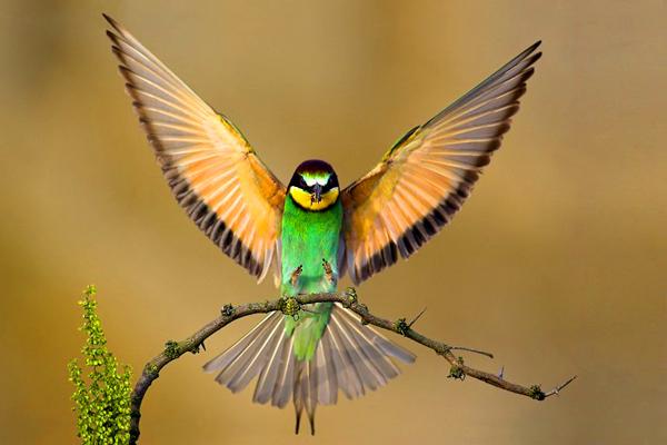 طيور وحيوانات بريه Oiseau