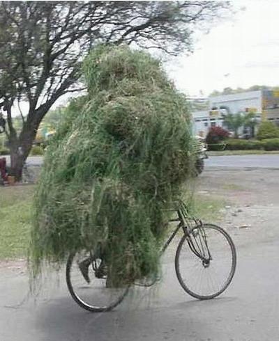 Bon Mercredi Velo-camouflage