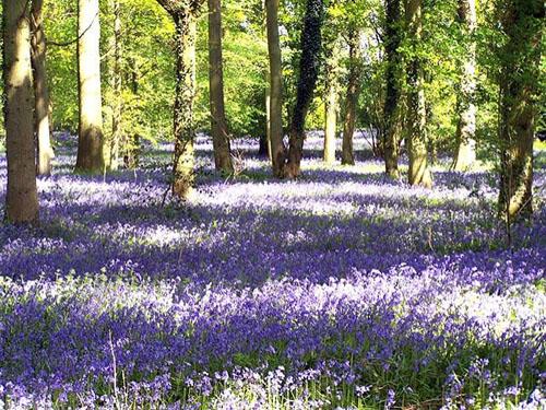 Raduje li vas dolazak proljeća? Proljece2