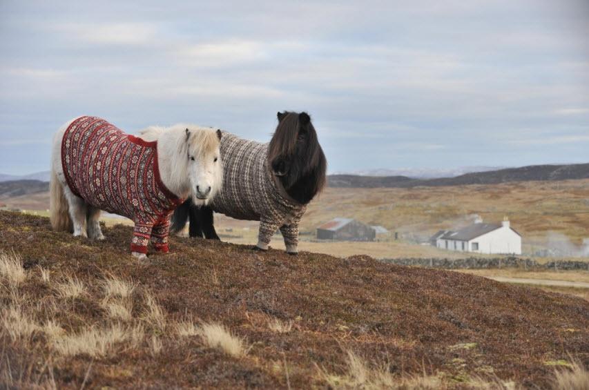 Ярнбомбинг и прочие вязальные приколы со всего мира Shetland-ponies-cardigans5