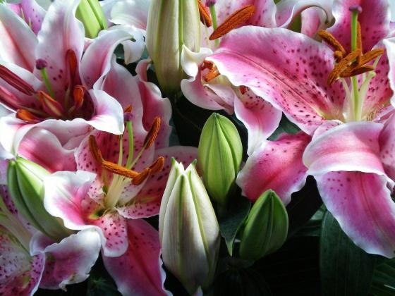EL BAR DE FERAZMAL MOCHITO - Page 4 Med-fleurs-de-lys-visoflora-3025