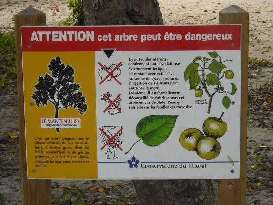 ARBRES DU MONDE... - Page 2 Med-mise-en-garde-concernant-le-mancenillier-visoflora-9186