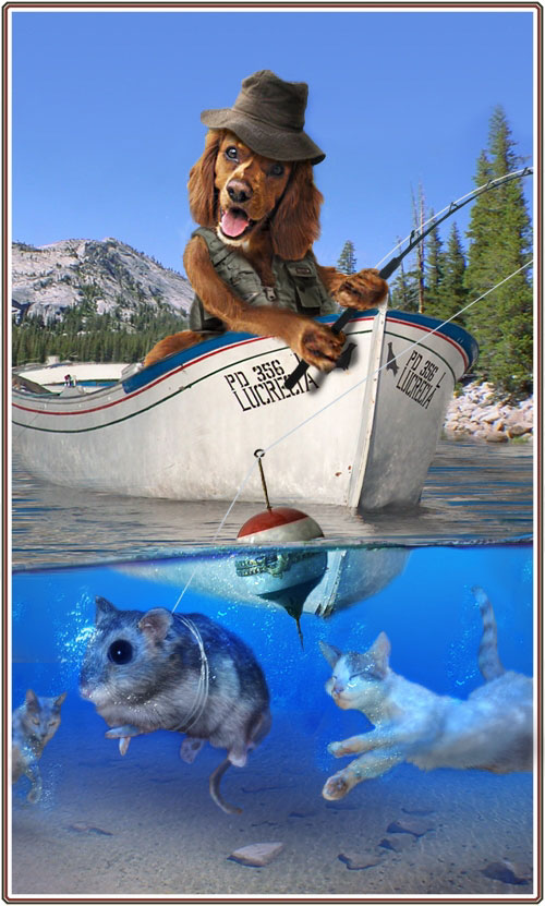 صور مضحكة جداااااااااا Dogfisher