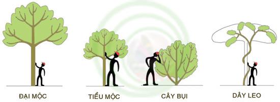 Thuật ngữ cây cảnh và cấu trúc thực vật (Phần 1)  D_song