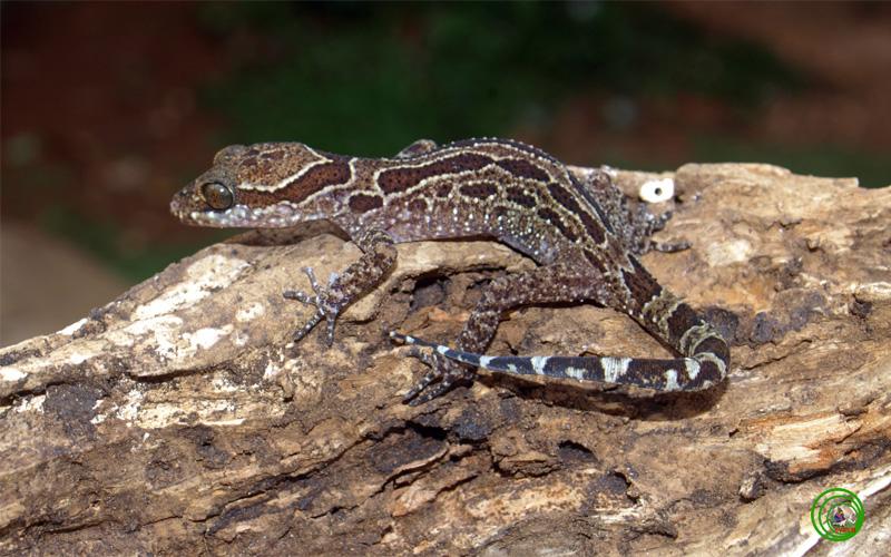 Hoàng hôn trên Vườn quốc gia Bù Gia Mập Bgm020