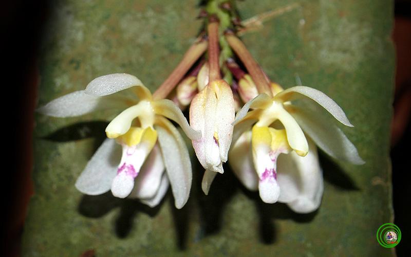 Hoàng hôn trên Vườn quốc gia Bù Gia Mập Bgm021