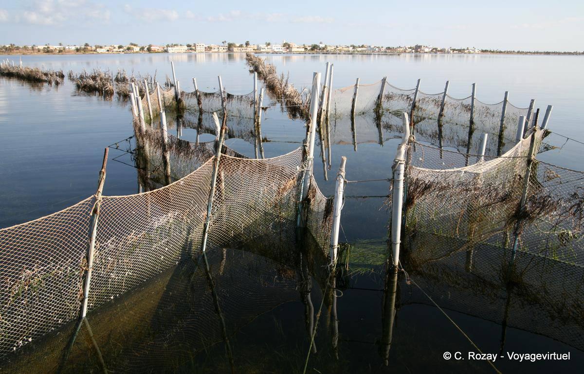 Chasse sous-marine Kerkennah-ouled-kacem-237