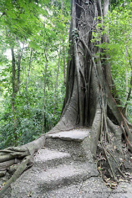 L'Énergie des arbres - Page 4 Palenque-arbres-4