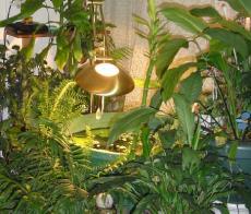 Vrt u sobi 230.230._var_www_vhosts_vrt.com.hr_httpdocs_images_vrtusobi