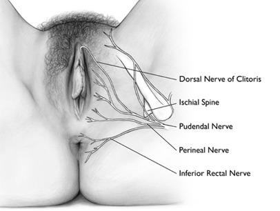 """Vulvodinia (impropriamente """"vestibolite vulvare"""") • Etiopatogenesi e semeiologia • bruciore vulvare, bruciore intimo • dolore vulvare •  prurito vulvare • Cistite •  Cistite Interstiziale (CI) • mastocita •  ipertono pavimento pelvico • VULVODINIA.INFO  Generalized_vulvodynia"""