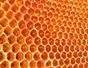 Honey – The Perfect Antibiotic Capable of Solving The Problem of Antibiotic Resistance Flickr-Honey-wildxplorer-300x233