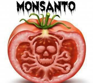 Monsanto Paid Google to Bury Unfavorable News (Investgation) Monsantotomato