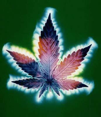 Cannabliss: The Spiritual Benefits of Marijuana Divine-Cannabis
