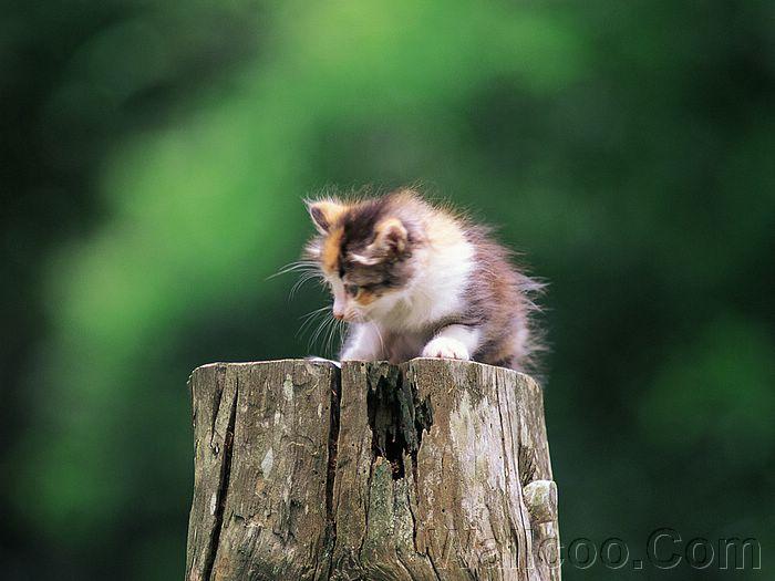 Chipmunk Problem Kitten_in_garden_kitten_MIL56058