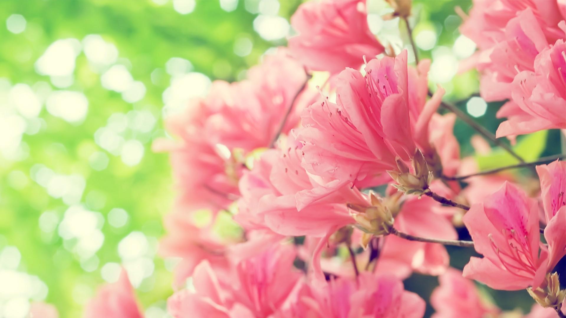 வால்பேப்பர்கள் ( flowers wallpapers ) - Page 19 Amazing_Flowers_Wallpapers_53