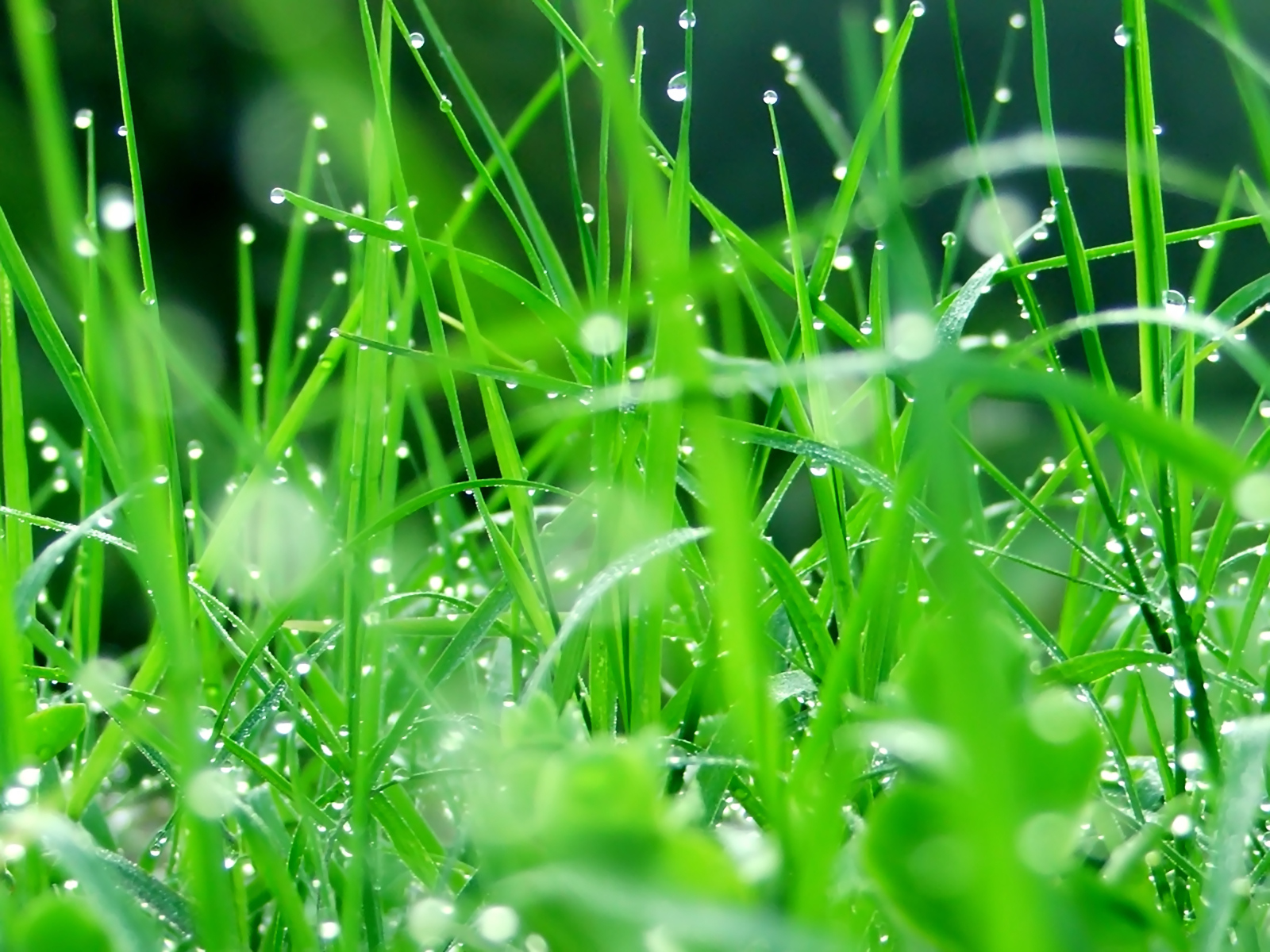 Belles photos  3686-perles-de-pluie-dans-l-herbe-WallFizz