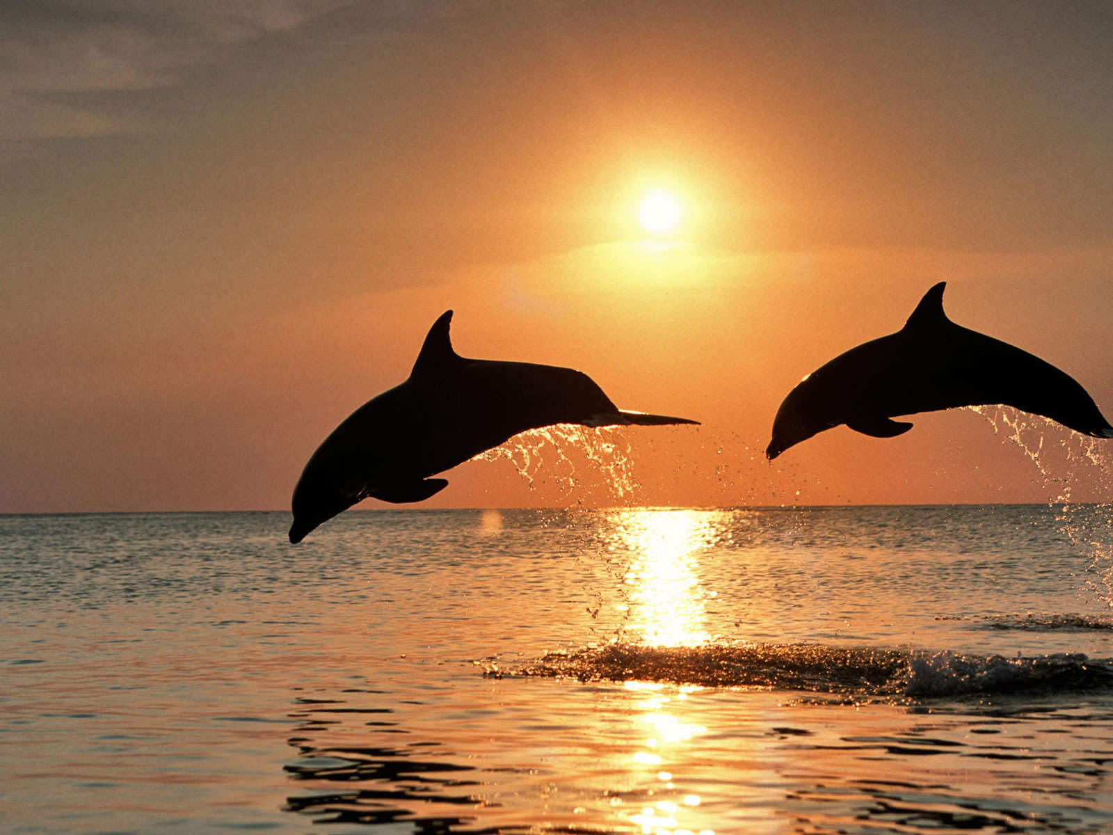 HD wallpapers Dolphins-jumping-at-sunset-1600x1200-1206058