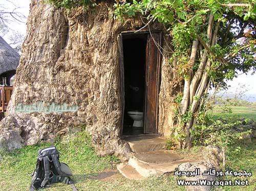 أغرب مارأيت من أشجار 3alm-alashgar25