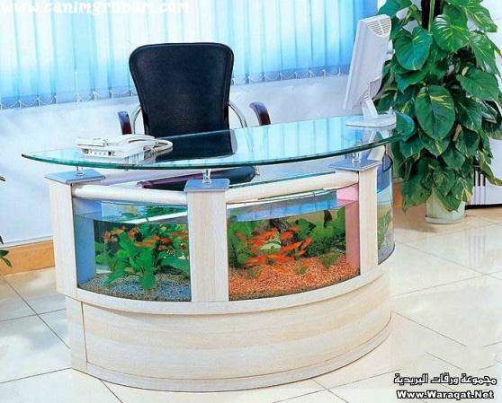 احواض سمك روعة A7oad-fish_1