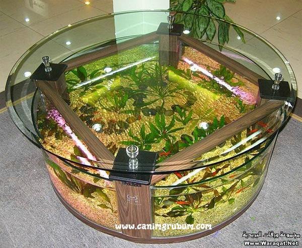 صور احواض السمك على شكل طاولات  A7oad-fish_3