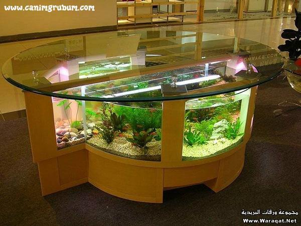 صور احواض السمك على شكل طاولات  A7oad-fish_4