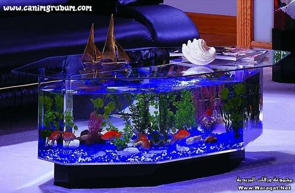 صور احواض السمك على شكل طاولات  A7oad-fish_9