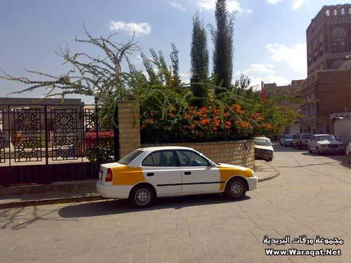 طوف وشوف فى اليمن الشقيق San3a37