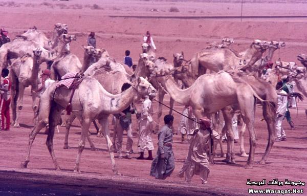 مصور امريكي يزور الرياض في السبعينات الميلادية ويلتقط هذه الصور Reyadh_zmaan16
