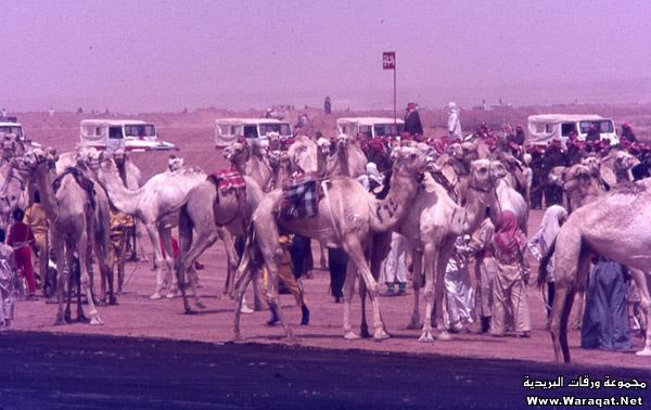مصور امريكي يزور الرياض في السبعينات الميلادية ويلتقط هذه الصور Reyadh_zmaan28