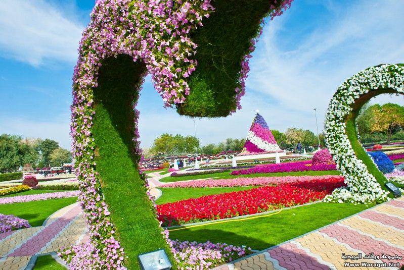 """أول حديقة تدخل موسوعة جينيس بأكبر عدد سلاسل ورد معلقة بالعالم """"العين برادايس"""" 7deqh_emarh16"""