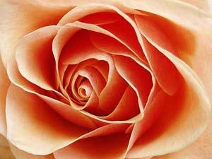 اكتب اسمك وشوف من أي الورود أنت ؟ Im024