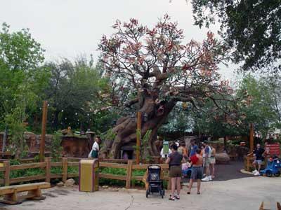 visite du Disney world magic Kingdom DSC00006