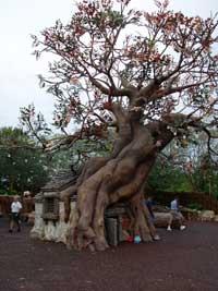 visite du Disney world magic Kingdom DSC00015