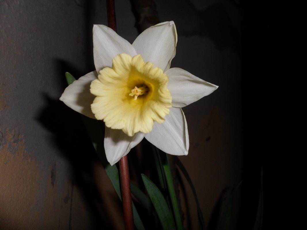 i Nostri bulbi che fioriscono/ tempistiche sull'impianto.... 2668544_orig