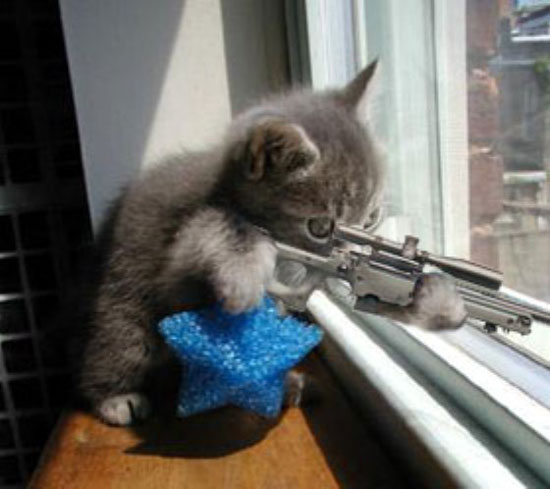 A real miniature crossbow I-love-kittens