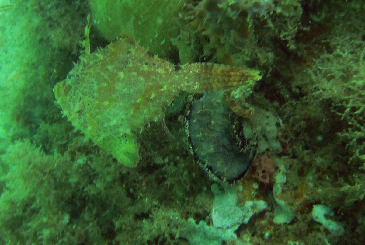 Sunday Dive: 14-04-2013 Coogee - Seiko SRP043 Coogee%2014-04-2013%20fish%202