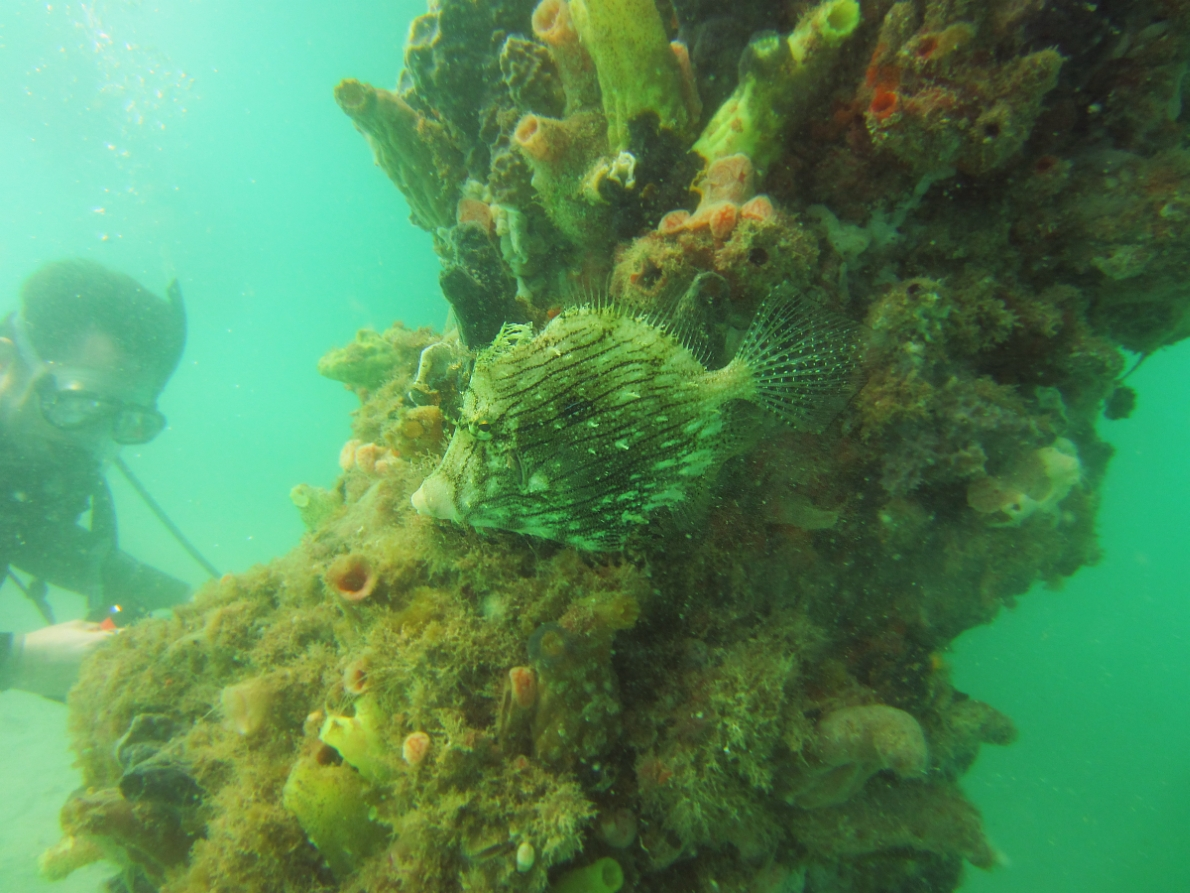 Sunday Dive: 14-04-2013 Coogee - Seiko SRP043 Coogee%2014-04-2013%20fish%203