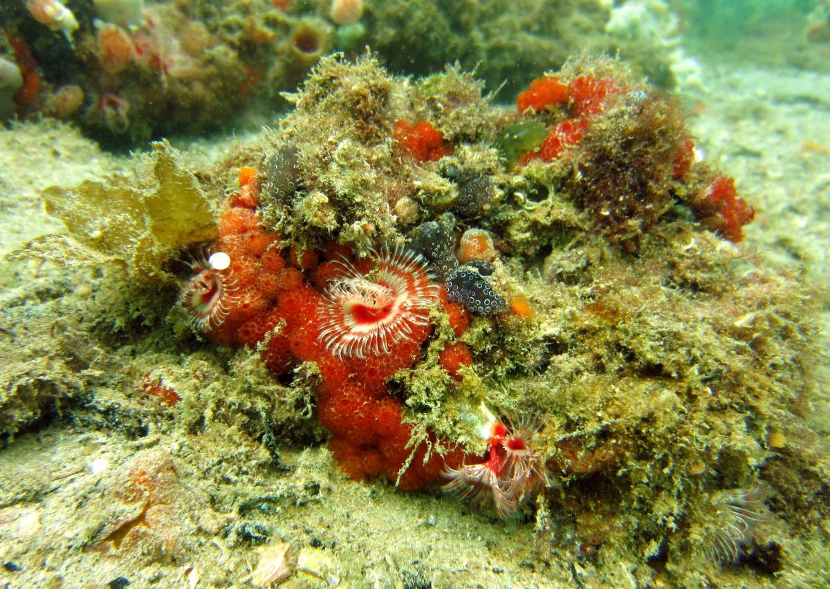 Sunday Dive: 21-04-2013 Rockingham - Orient Mako Rockingham%20grain%20teminal%2021-04-2013%20bunch%20of%20sea%20flowers%201
