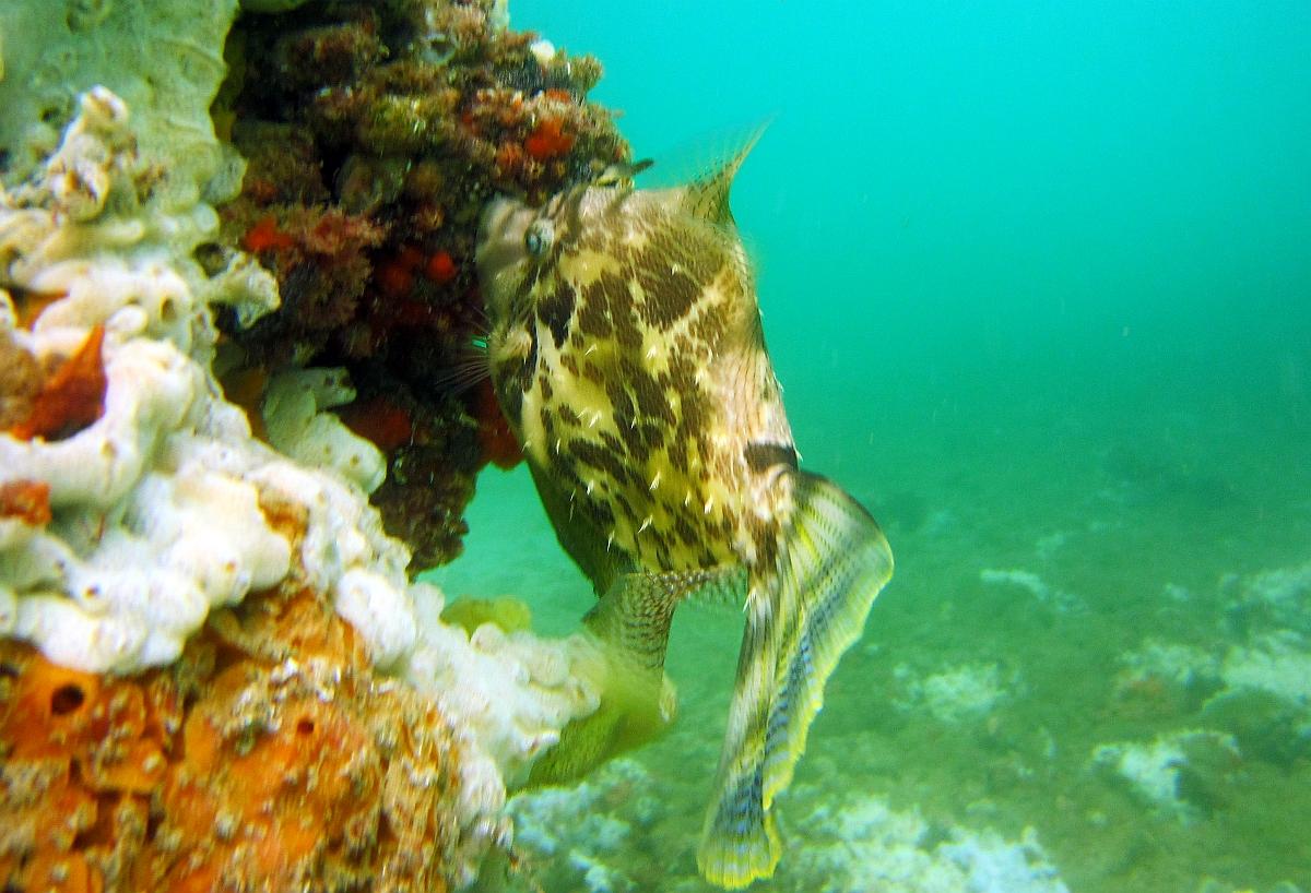Sunday Dive: 21-04-2013 Rockingham - Orient Mako Rockingham%20grain%20teminal%2021-04-2013%20fish%201